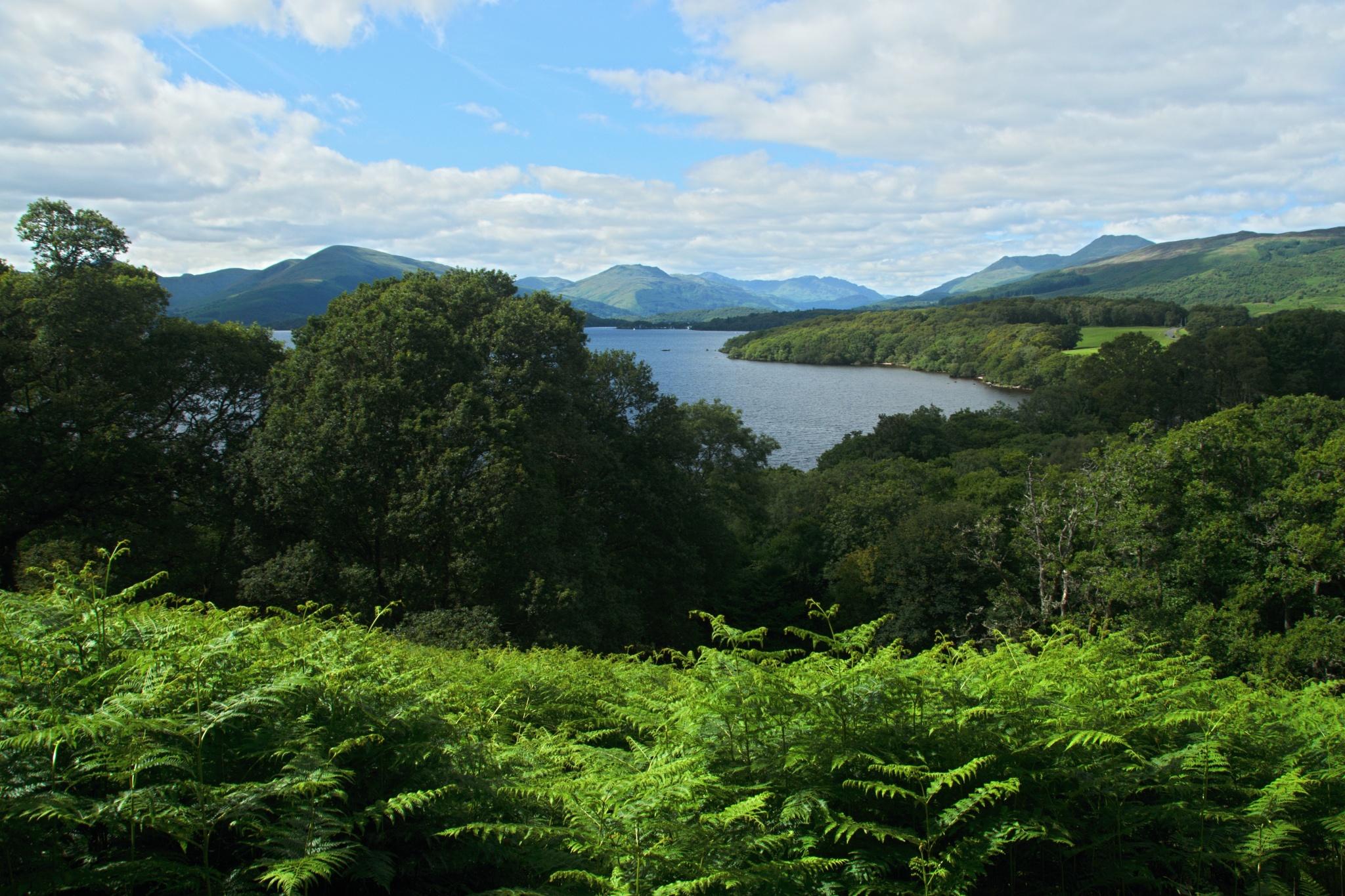 Hustá vegetace na břehu jezera Loch Lomond