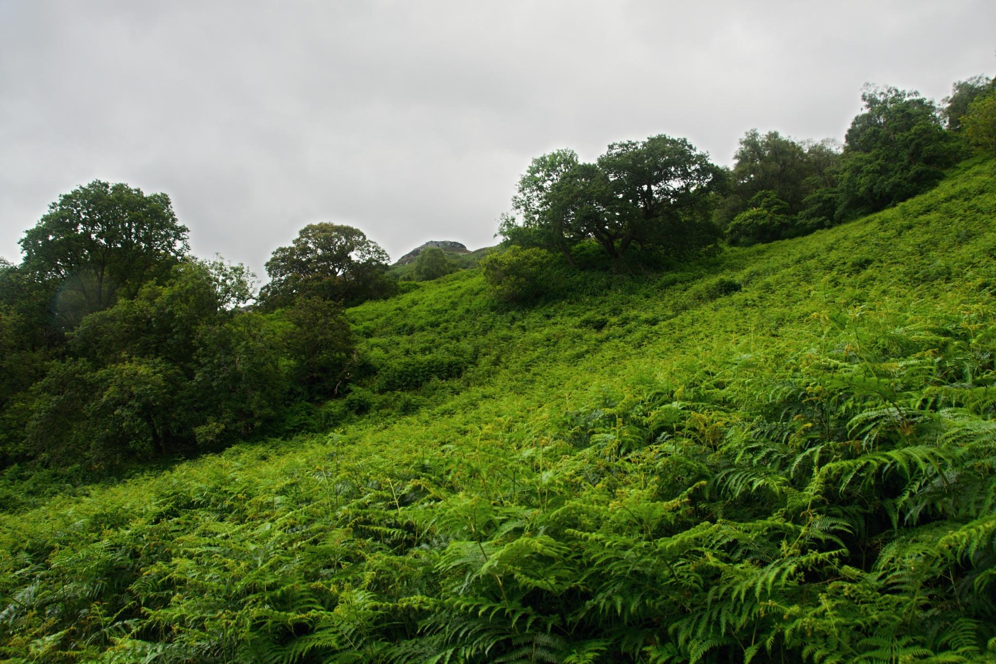 Skotská divočina