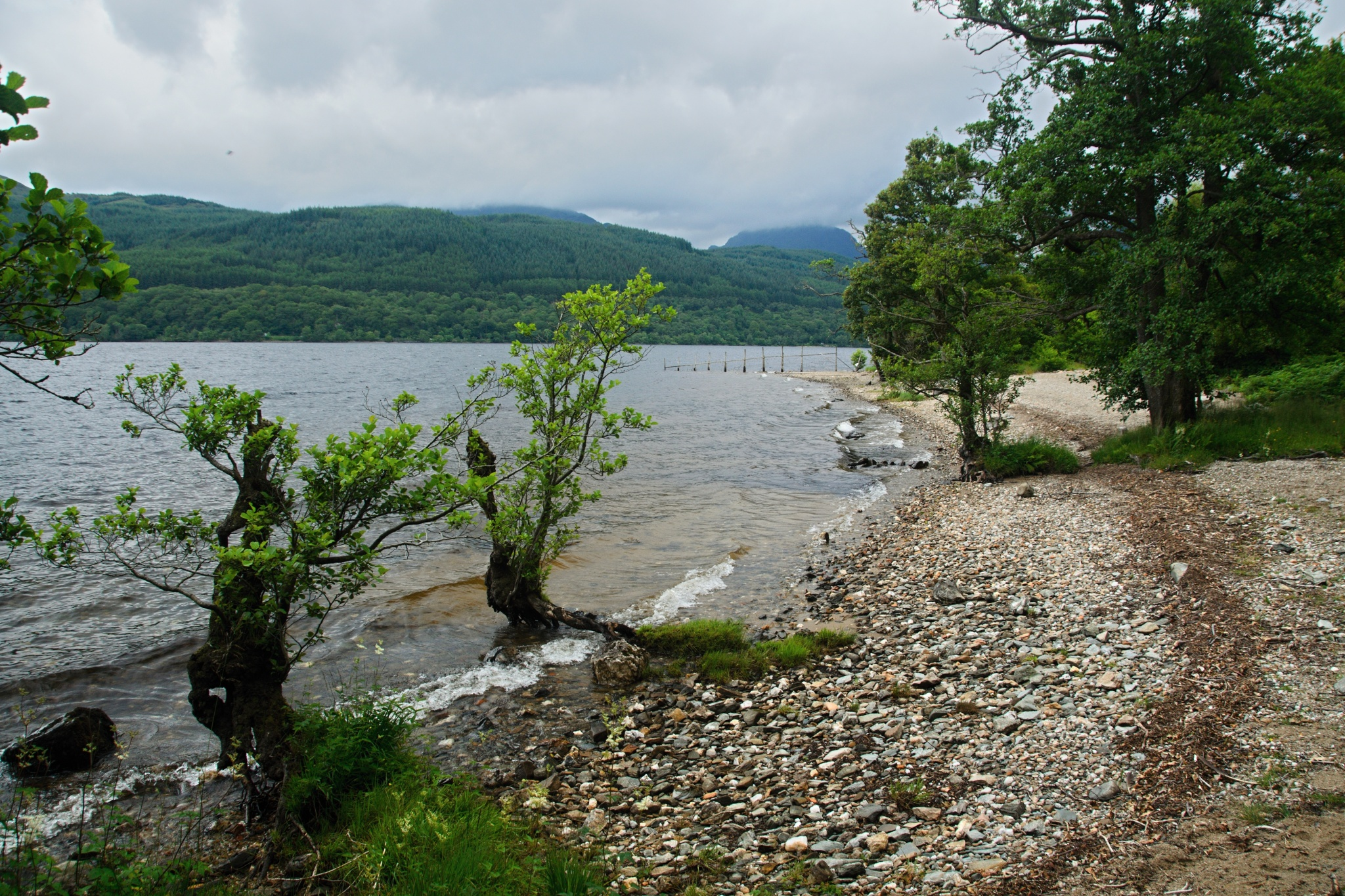 Pobřeží jezera Loch Lomond