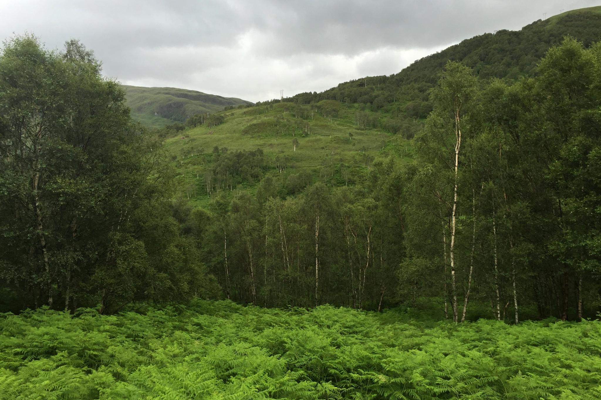 Skotsko září všemi odstíny zelené barvy