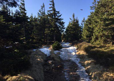 Sníh, led, bláto, kořeny a spousta vody