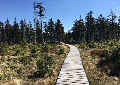 Dřevěný chodníček skrz rašeliniště