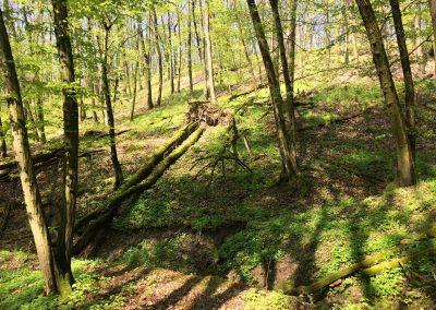 Krásný les u Roblína