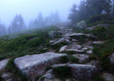 Mlha přede mnou...