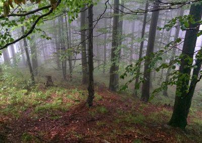 Ponurý les...