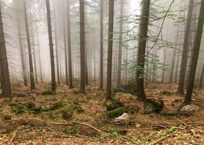 Mlha brání slunečním paprskům a vytváří skoro podzimní atmosféru.