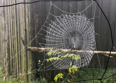 Pavouk na číhané.