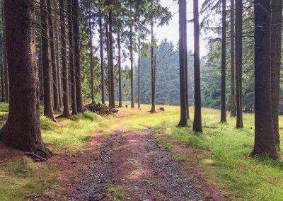 Všude samý les