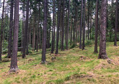 V takovémhle lese je radost pochodovat.