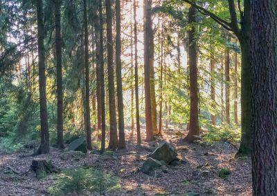 Na fotce to tak nevynikne, ale sluneční paprsky prosvítající skrz stromy byly fakt kouzelný.