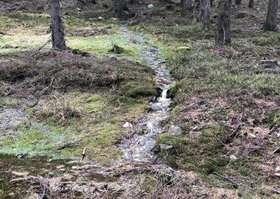 V lese je spousta vody