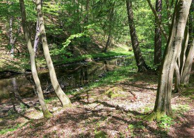 Krásná stezka kolem Zbirožského potoka.