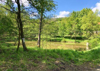 Rybník nedaleko hájovny Bušohrad.