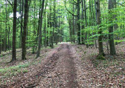 Les skoro kouzelný