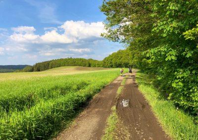 Polní cesta u Křiniště