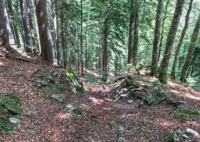Ještě kousek bukovým lesem