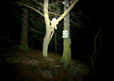 Medvěd na stromě u Jankovského mlýna