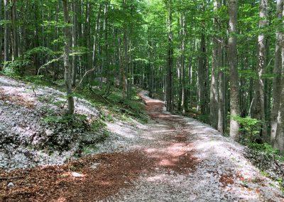 Krásná cesta v příjemném chládku lesa na závěr