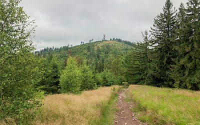 Červenokostelecká 100 2020 aneb asfalt, trail, a nakonec i pár kopců